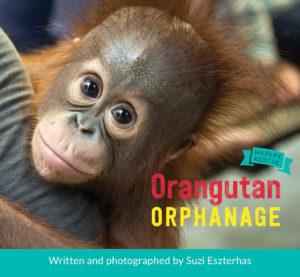 orangutan-orphanage
